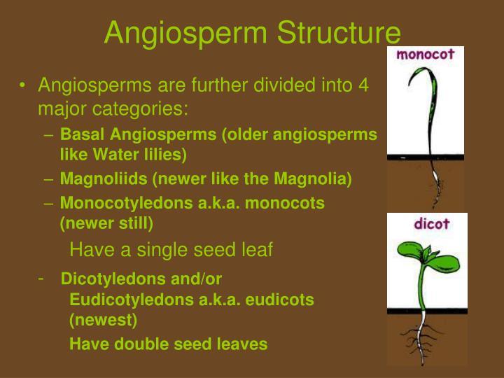 Angiosperm Structure