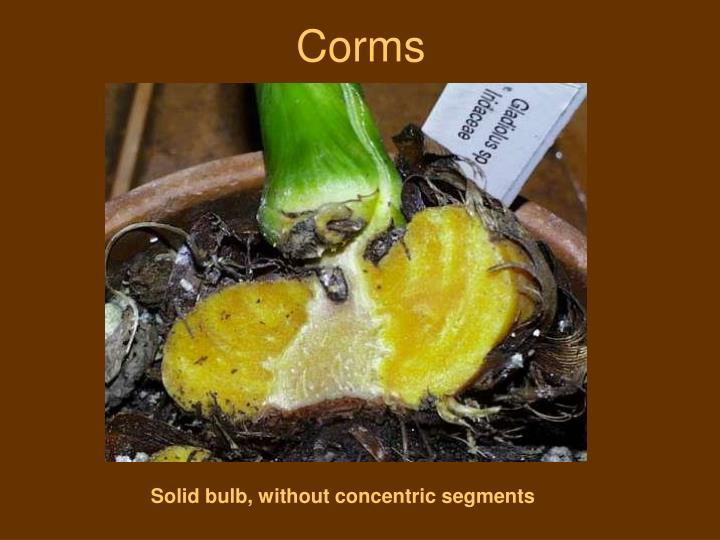 Corms
