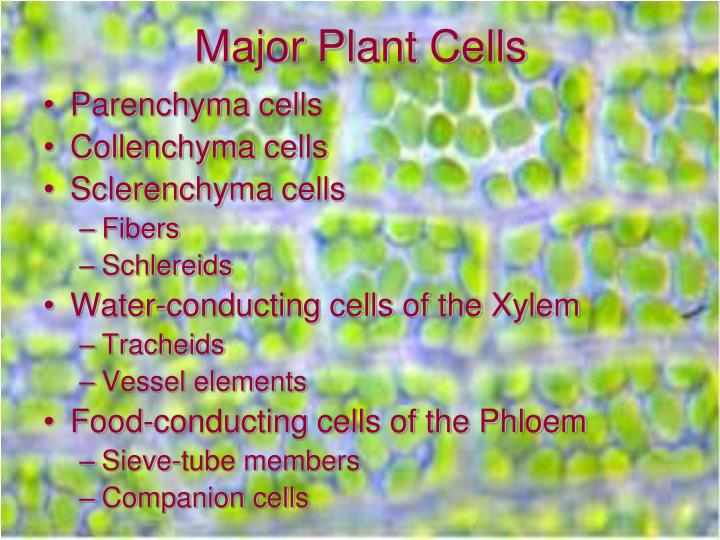 Major Plant Cells