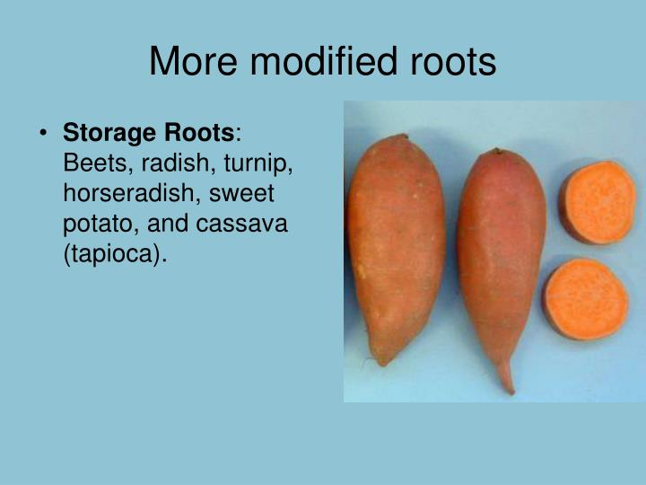 More modified roots