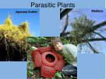 parasitic plants1