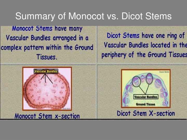 Summary of Monocot vs. Dicot Stems