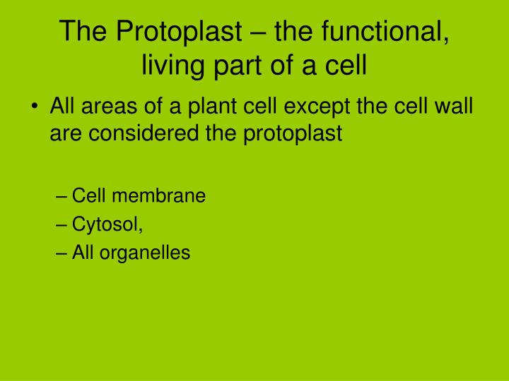 The Protoplast – the functional, living part of a cell