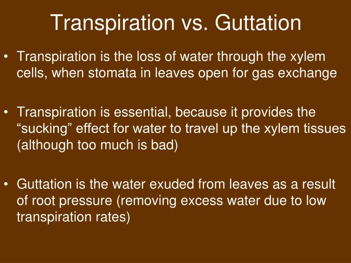 Transpiration vs. Guttation
