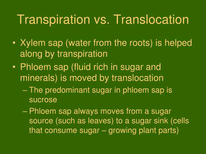 Transpiration vs. Translocation
