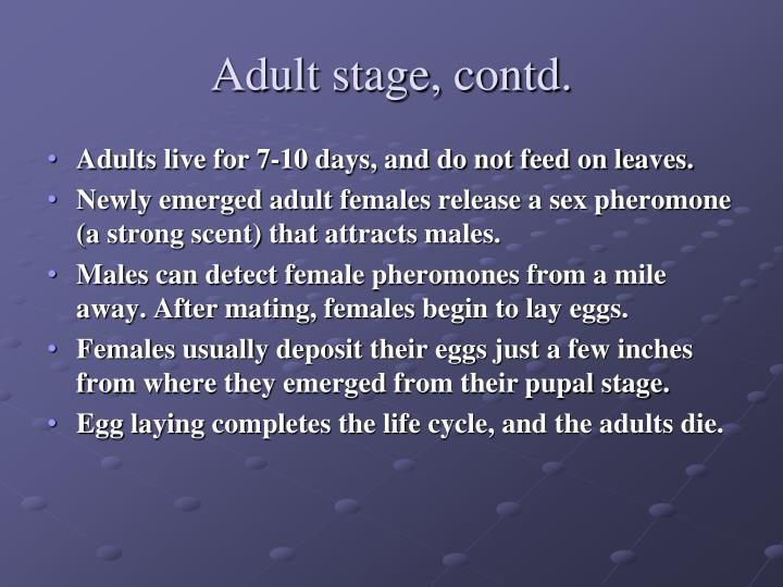 Adult stage, contd.