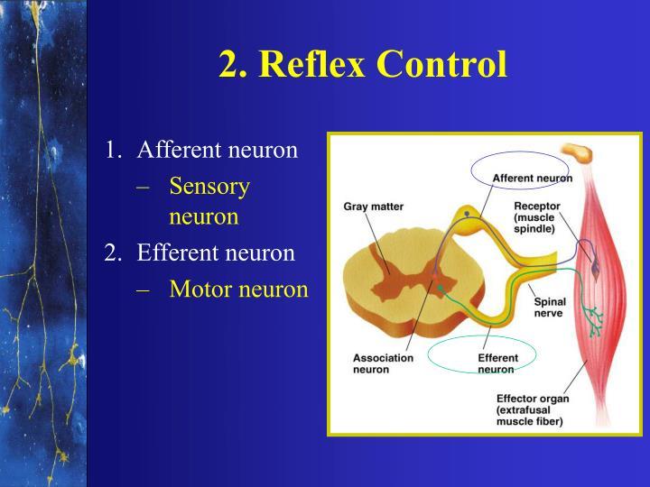 2. Reflex Control