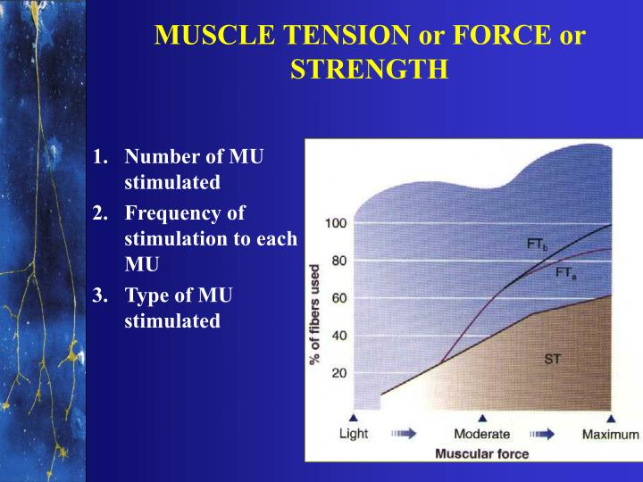 MUSCLE TENSION or FORCE or STRENGTH