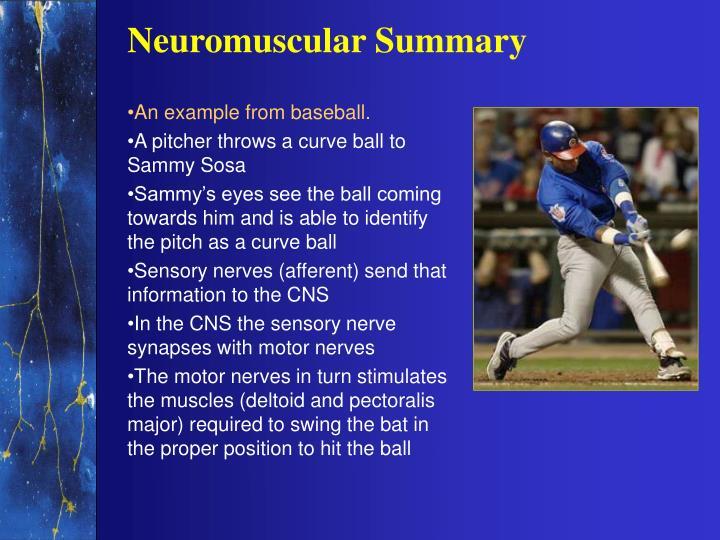Neuromuscular Summary