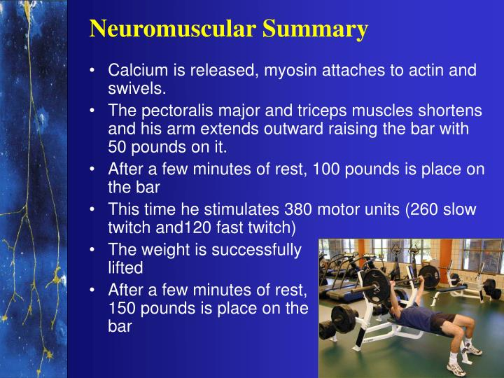 Neuromuscular Summary