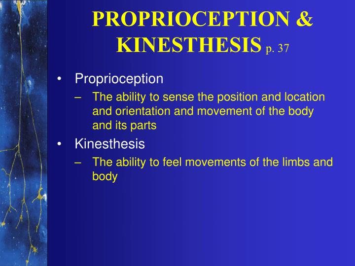 PROPRIOCEPTION & KINESTHESIS