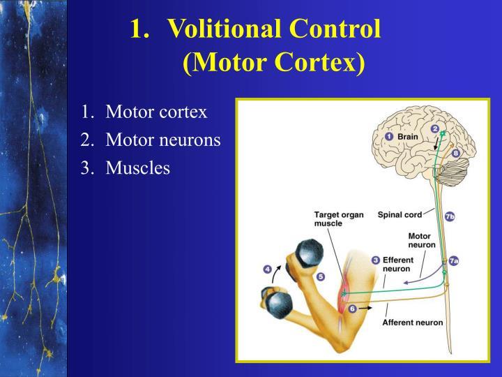 Volitional Control