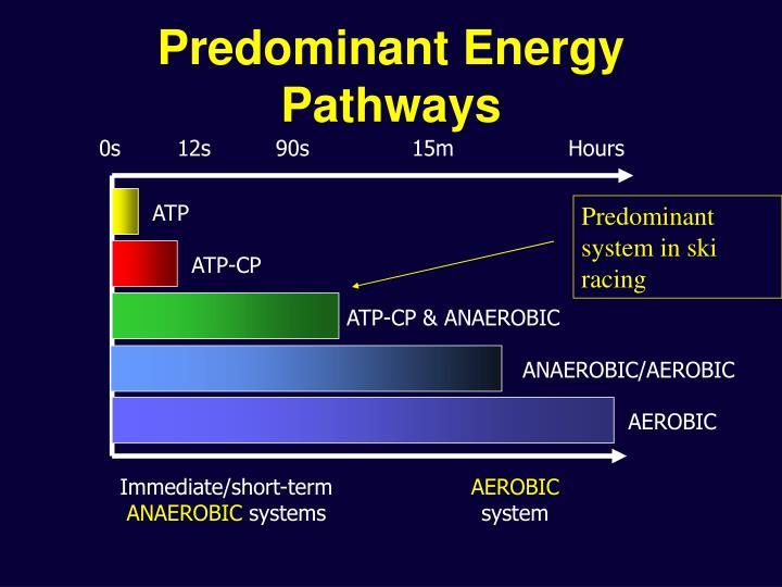Predominant Energy Pathways