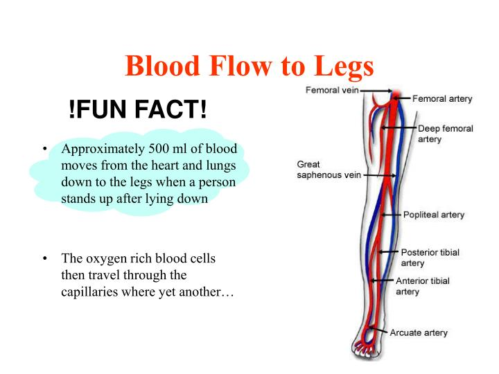 Blood Flow to Legs