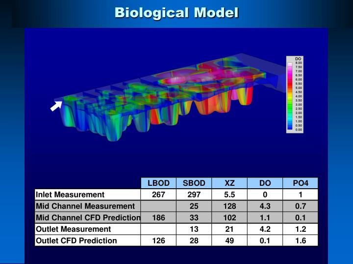 Biological Model