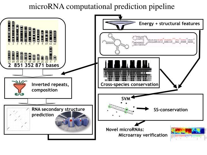microRNA computational prediction pipeline