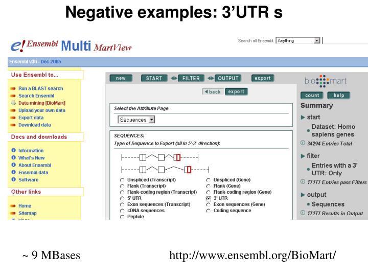 Negative examples: 3'UTR s