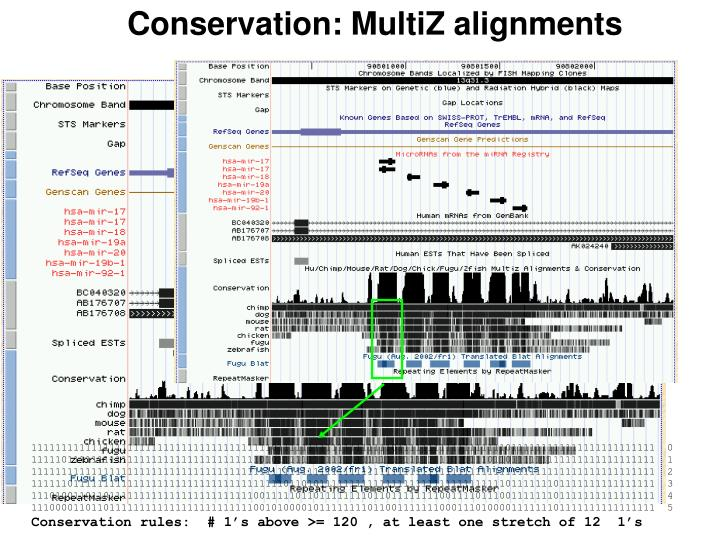 Conservation: MultiZ alignments