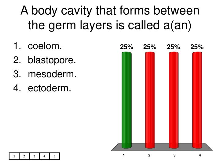 A body cavity that forms between the germ layers is called a(an)