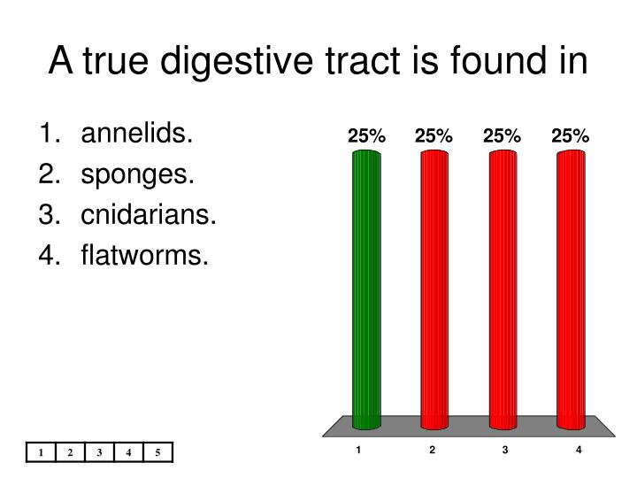 A true digestive tract is found in