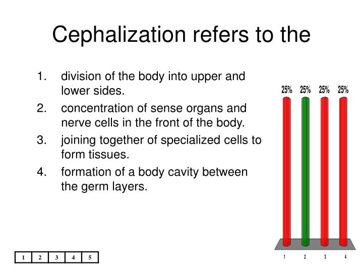 Cephalization refers to the