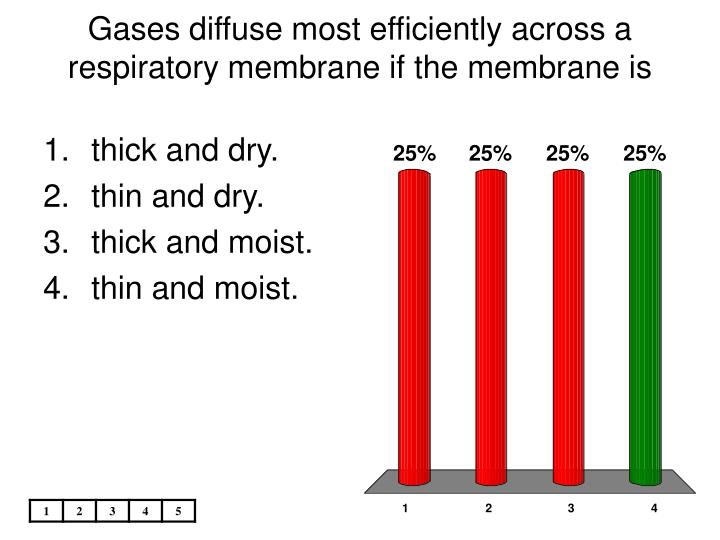 Gases diffuse most efficiently across a respiratory membrane if the membrane is