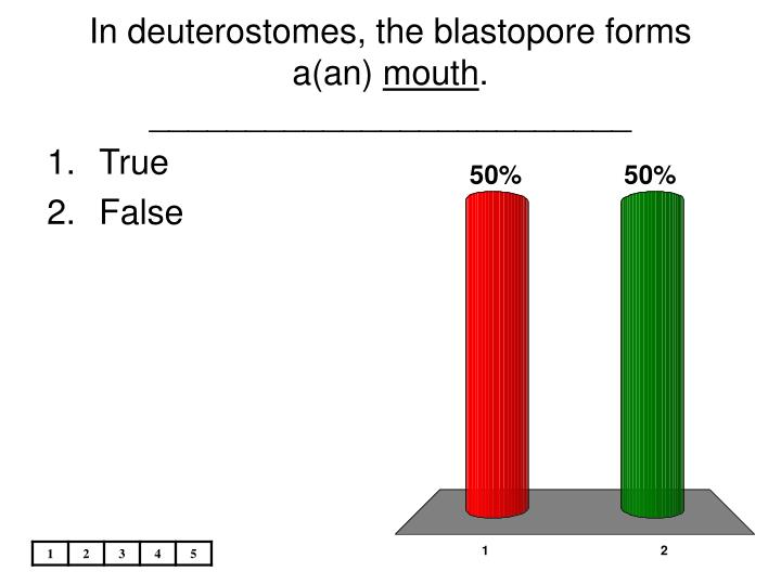 In deuterostomes, the blastopore forms a(an)
