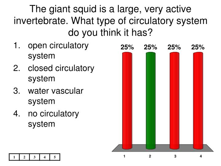 The giant squid is a large, very active invertebrate. What type of circulatory system do you think it has?