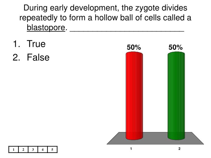 During early development, the zygote divides repeatedly to form a hollow ball of cells called a