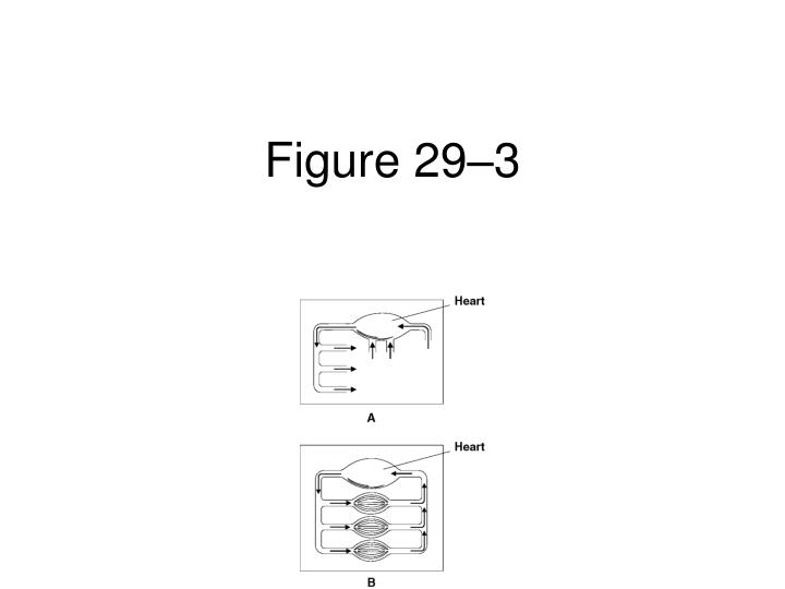 Figure 29–3