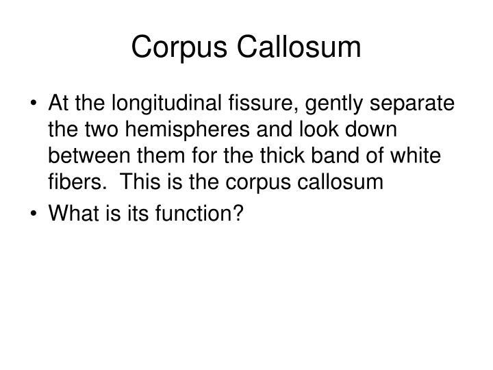 Brain Corpus Callosum Function