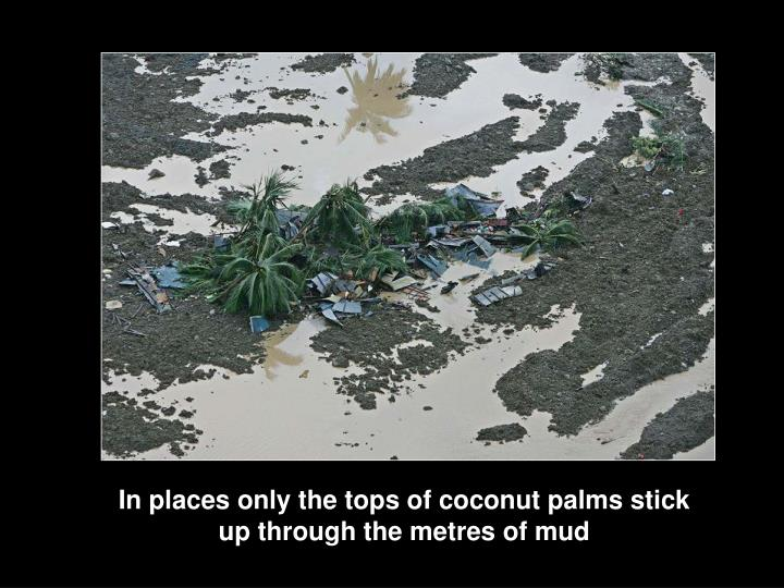 In places only the tops of coconut palms stick up through the metres of mud