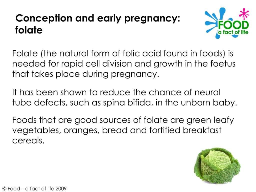 Conception and early pregnancy: