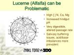 lucerne alfalfa can be problematic