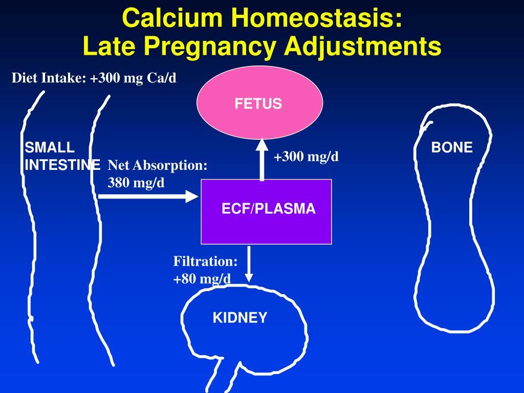 Calcium Homeostasis: