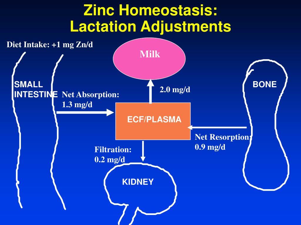 Zinc Homeostasis: