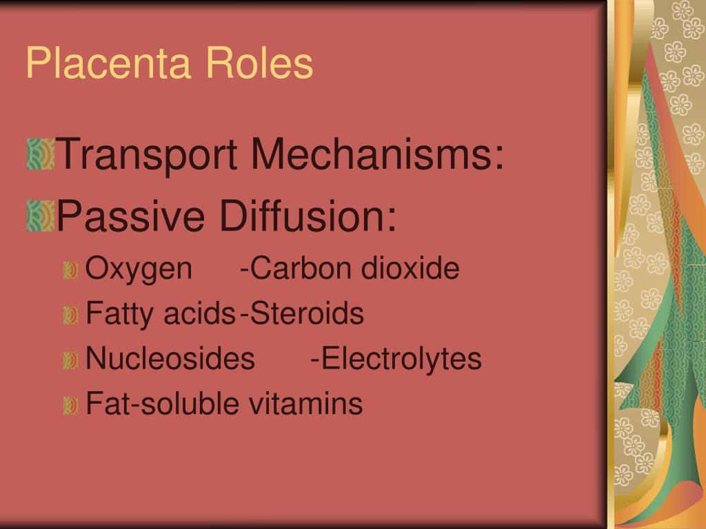 Placenta Roles