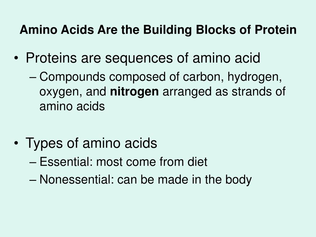 Amino Acids Are the Building Blocks of Protein