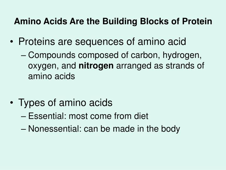 Amino acids are the building blocks of protein l.jpg
