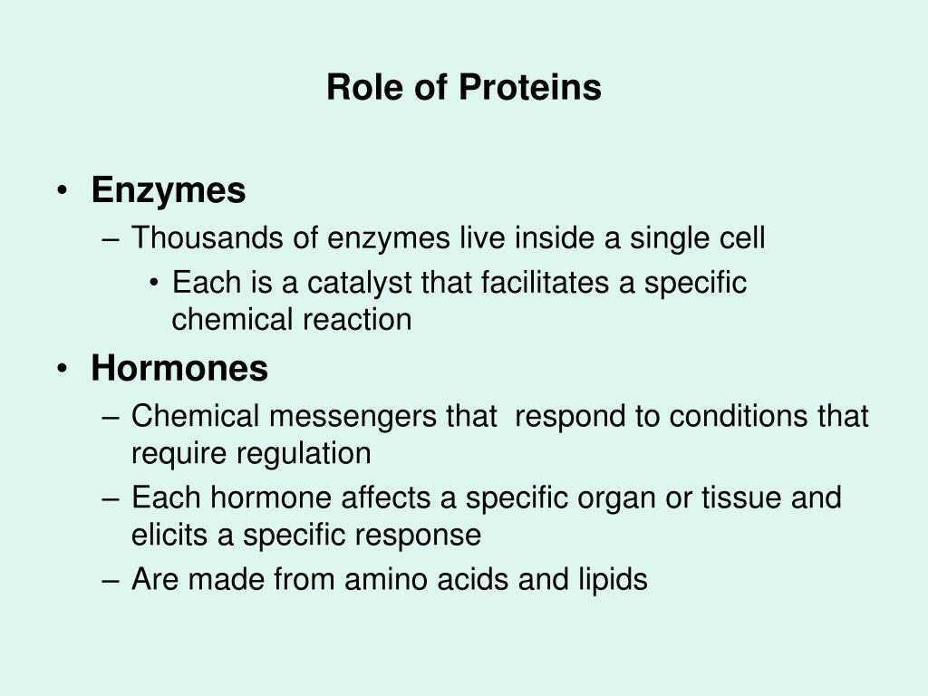 Role of Proteins