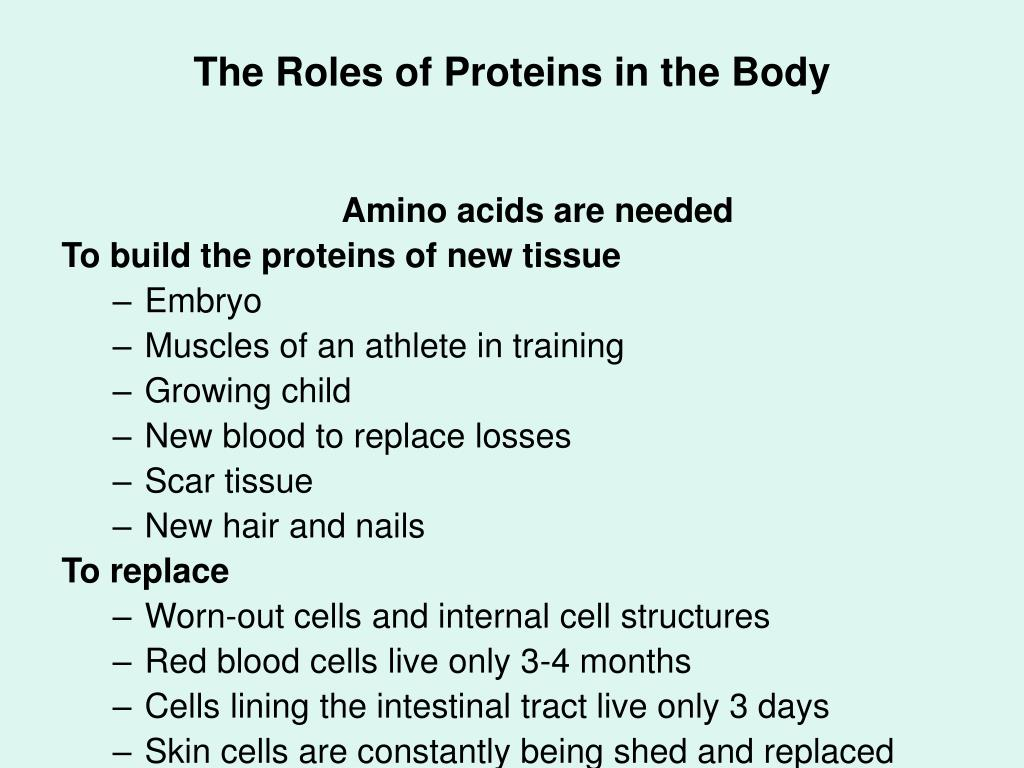 The Roles of Proteins in the Body