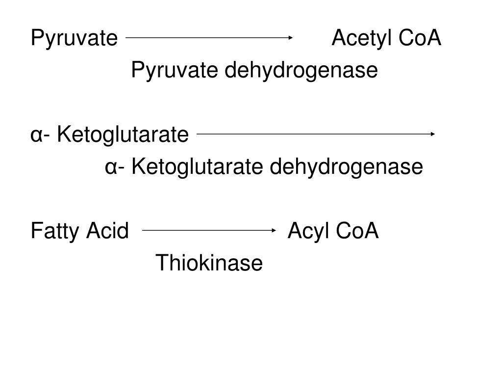 Pyruvate Acetyl CoA