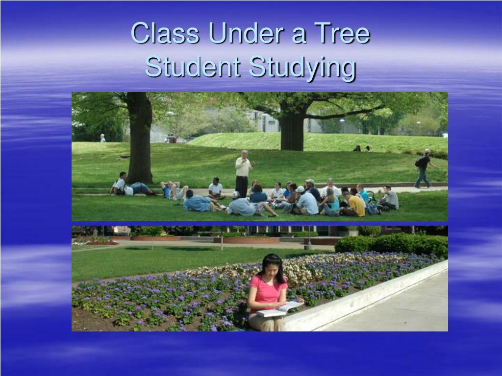 Class Under a Tree