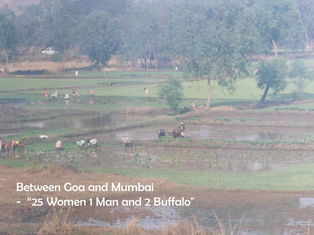 "Between Goa and Mumbai             -  ""25 Women 1 Man and 2 Buffalo"""