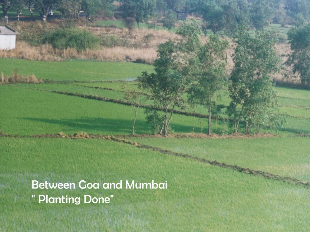 "Between Goa and Mumbai    "" Planting Done"""