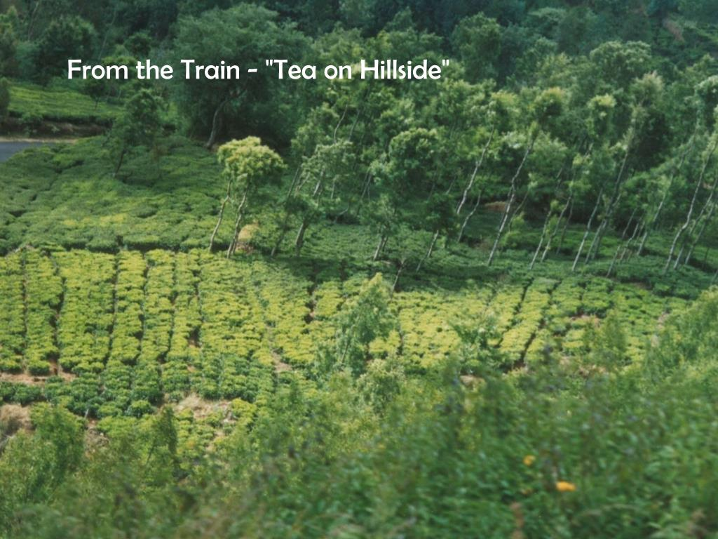 "From the Train - ""Tea on Hillside"""