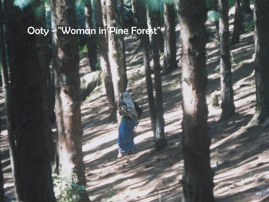 """Ooty - """"Woman in Pine Forest"""""""
