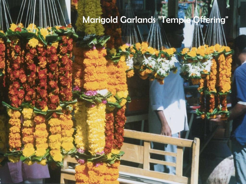 "Marigold Garlands ""Temple Offering"""