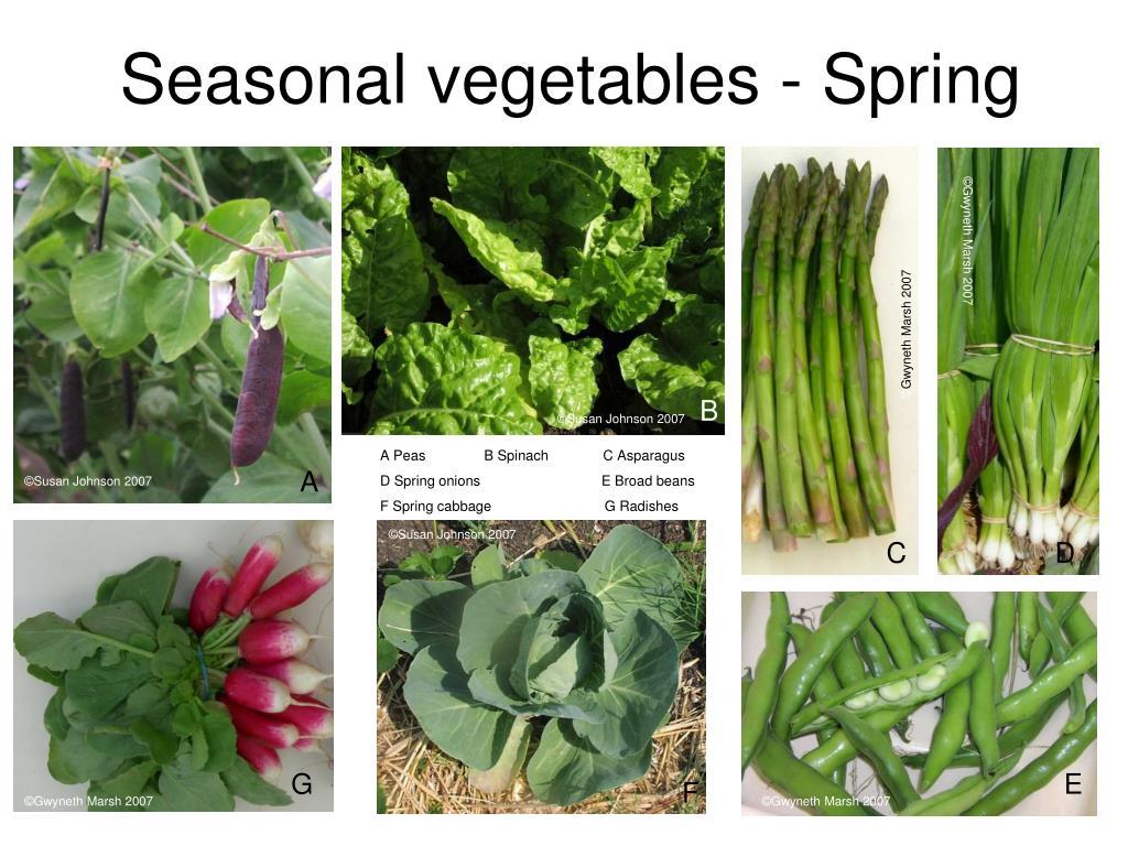 Seasonal vegetables - Spring