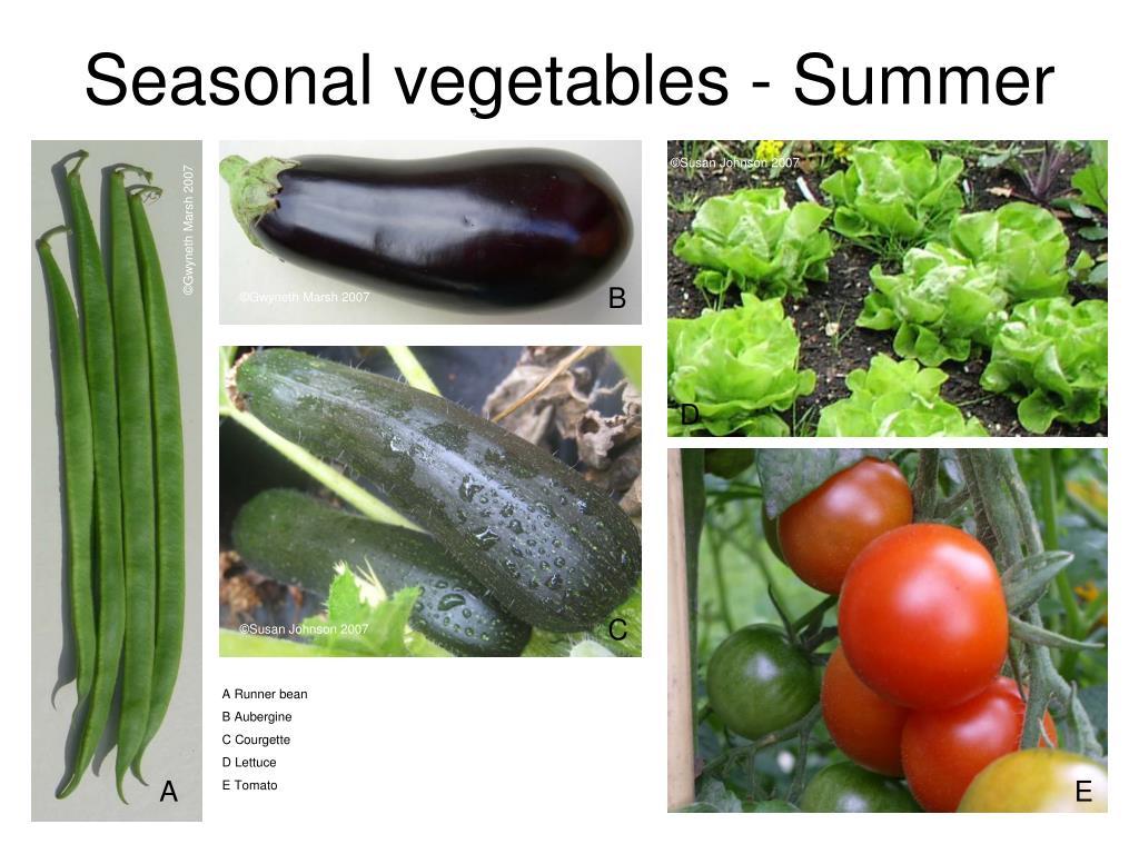 Seasonal vegetables - Summer